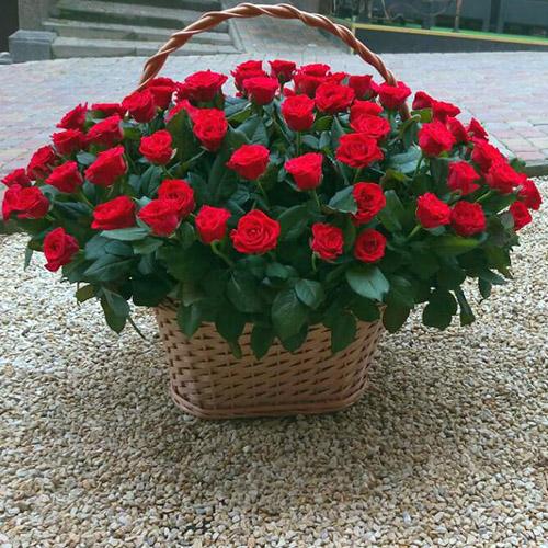 101 красная роза в корзине доставка в Ровно
