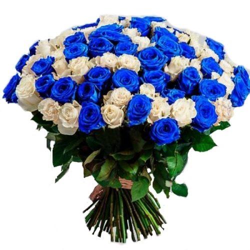 101 белая и синяя роза (крашеная) фото