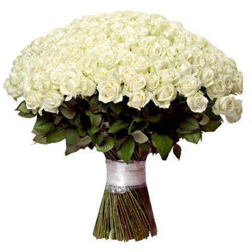 букет 201 біла троянда фото
