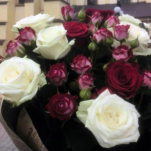 белая роза и спрей фото