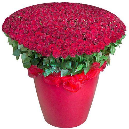 301 красная роза в большом вазоне фото товара