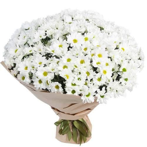 Фото товару 51 ромашкова хризантема