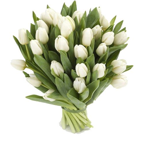 Фото товара 25 білих тюльпанів в Ровно
