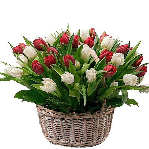 Фото товара 51 тюльпан у кошику в Ровно