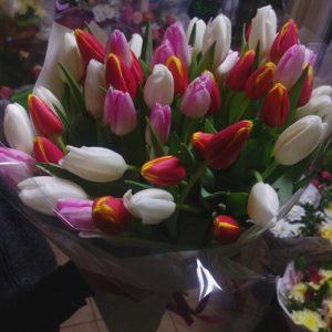 Фото товару 51 тюльпан