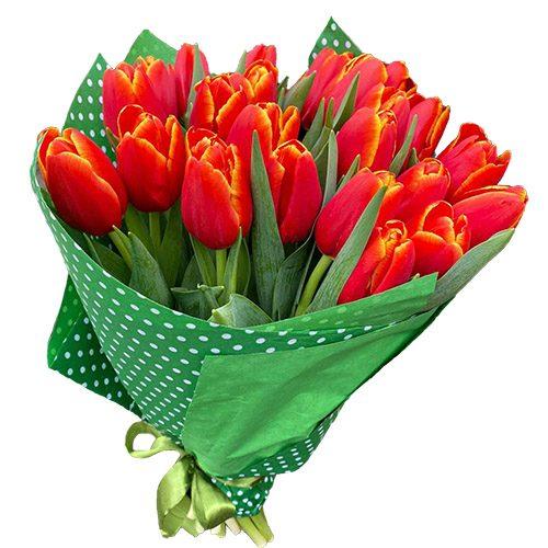 """Фото товара 21 тюльпан """"Маковий цвіт"""" в Ровно"""