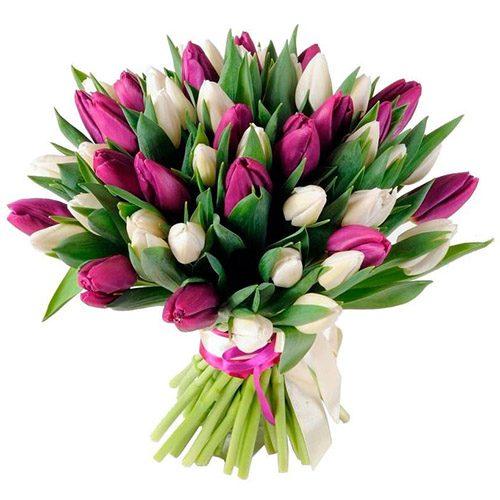 Фото товара 51 біло-пурпурний тюльпан (зі стрічкою) в Ровно