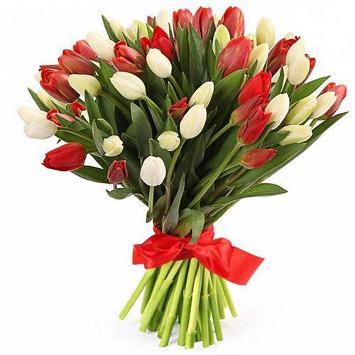 Фото товара 51 червоно-білий тюльпан (зі стрічкою) в Ровно