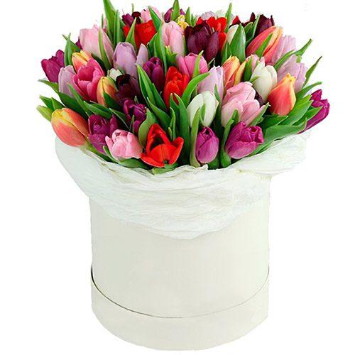 Фото товара 51 тюльпан ассорти в коробке в Ровно