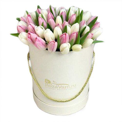 Фото товара 51 біло-рожевий тюльпан у коробці в Ровно