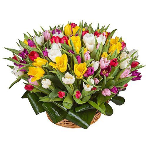 Фото товара 75 тюльпанів мікс (всі кольори) в кошику в Ровно